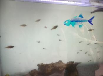 品川アクアパーク水族館4.png